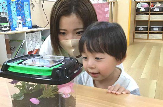 虫かごを覗く子どもと保育士