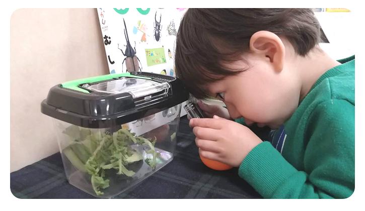 虫かごを熱心に覗く子ども